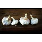 The Garlic Store
