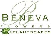 Beneva Flowers coupons or promo codes at beneva.com