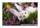 Flower Pet Lovers coupons or promo codes at flowerpetlovers.com