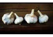 The Garlic Store coupons or promo codes at thegarlicstore.com